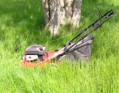 Gräset var högt, så högt att det var besvärligt att klippa.